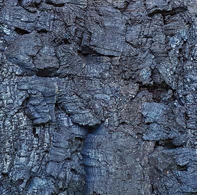 Bark Bluemoon